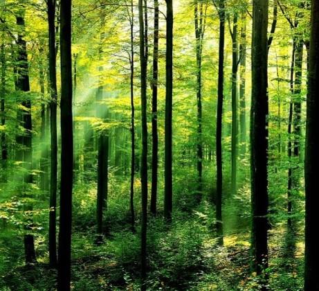 Responsibilité environnementale